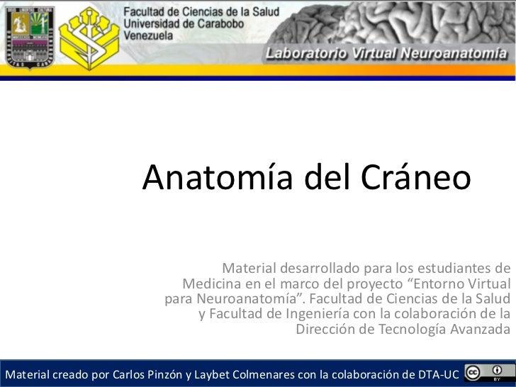 Anatomía del Cráneo                                      Material desarrollado para los estudiantes de                    ...