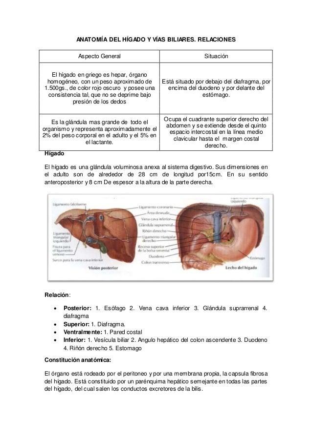 Anatomía del hígado y vías biliares.