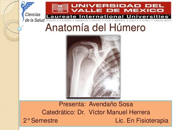 anatoma-del-hmero-1-728.jpg?cb=1302041373