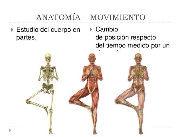 Anatomia del movimiento- yoga