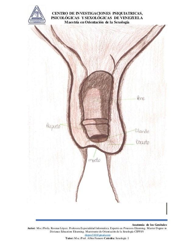 Anatomía de los Genitales