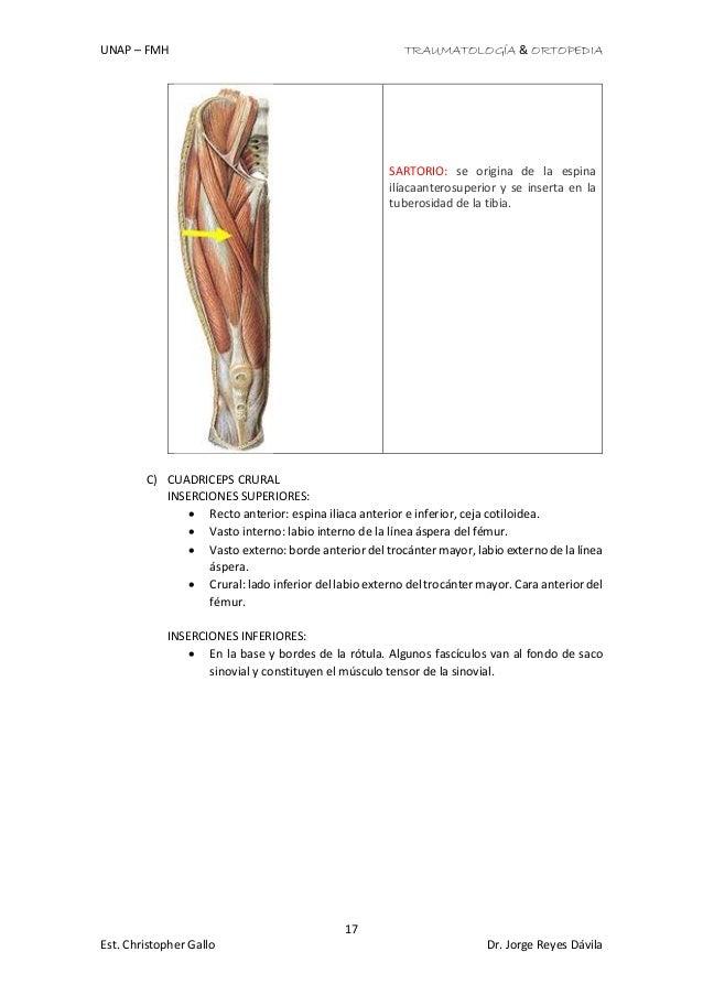 Perfecto Los Músculos De La Anatomía De Las Extremidades Superiores ...