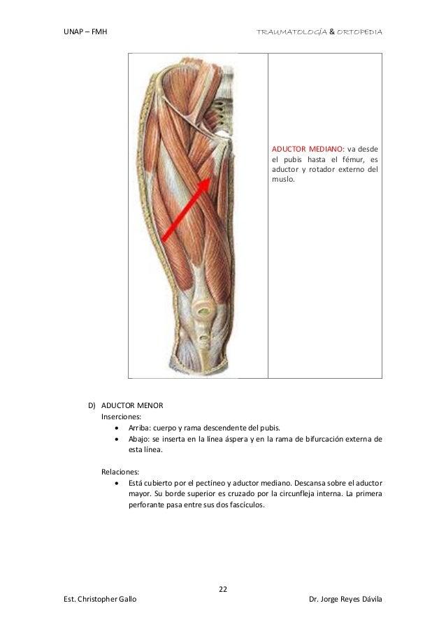 Bonito Nervio Cuerpo Humano Tabla Festooning - Imágenes de Anatomía ...