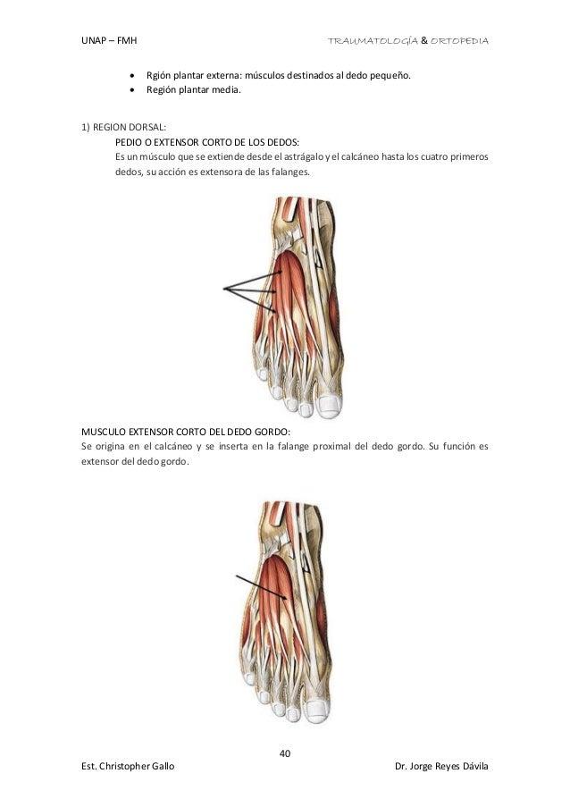 Moderno Nervios En Los Dedos Imágenes - Imágenes de Anatomía Humana ...