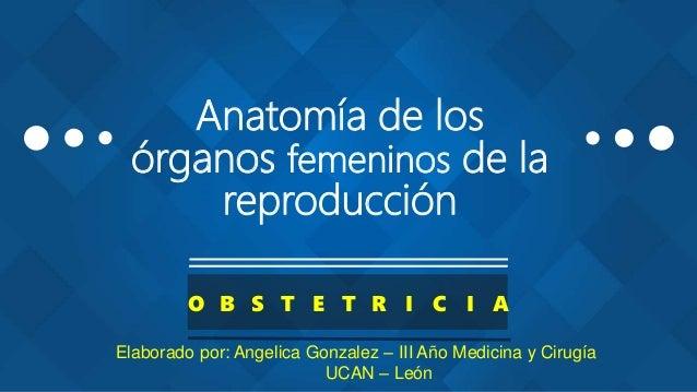 Anatomía de los órganos femeninos de la reproducción