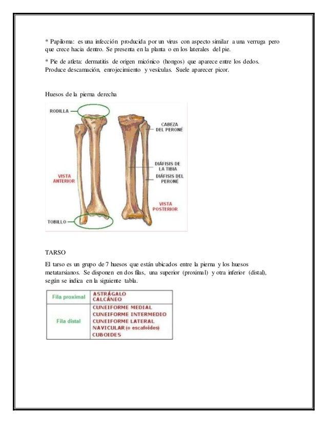Hermosa Erguida La Anatomía Fila Composición - Anatomía de Las ...