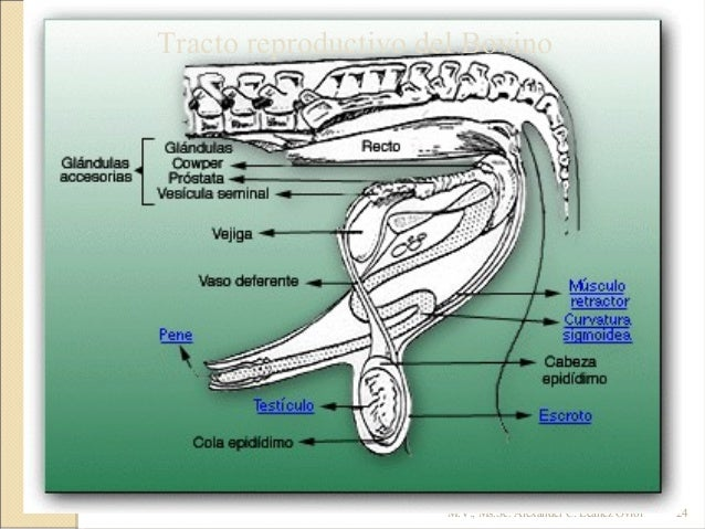 pdf especies animales como se relacionan macho hembra pdf