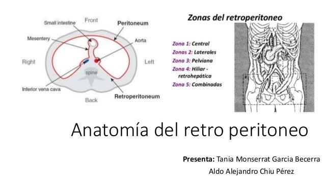 Anatomía del retro peritoneo