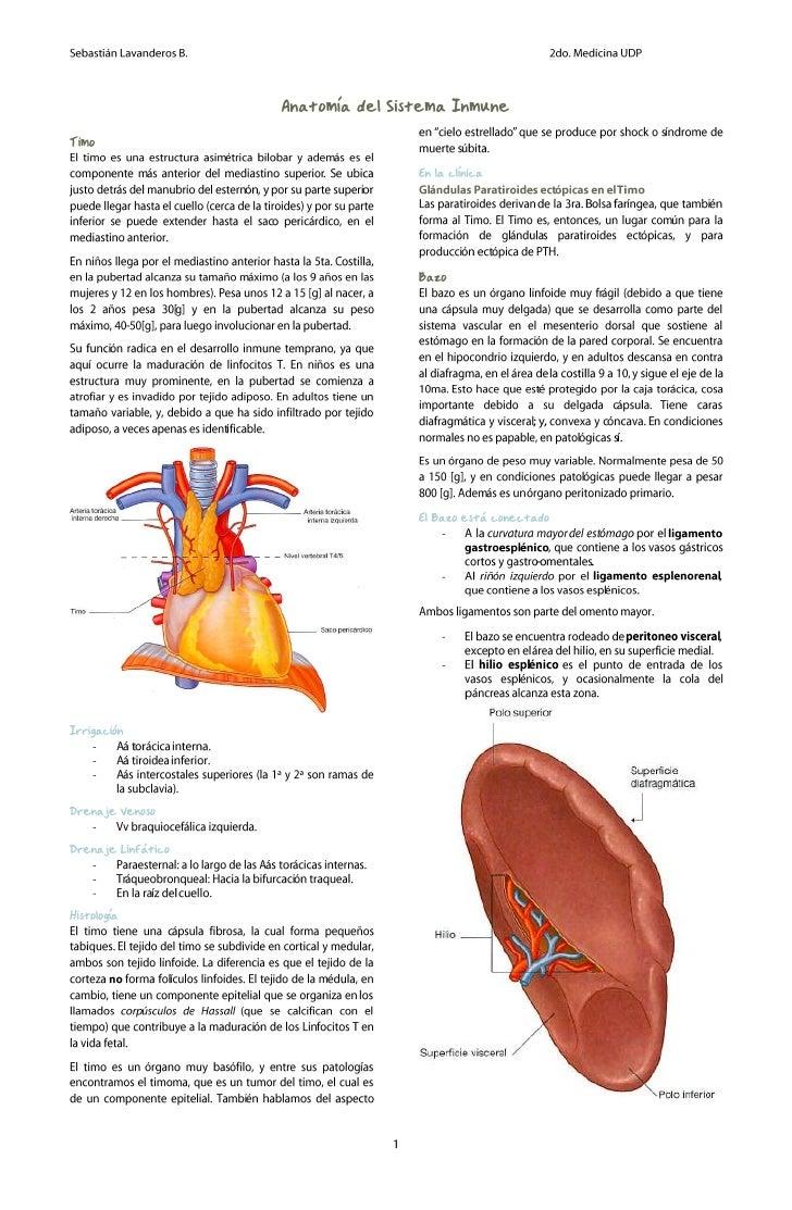 Anatomía del sistema inmune