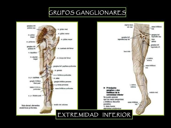 Linfonodos - Funci\u00f3n y ubicaci\u00f3n en el cuerpo humano