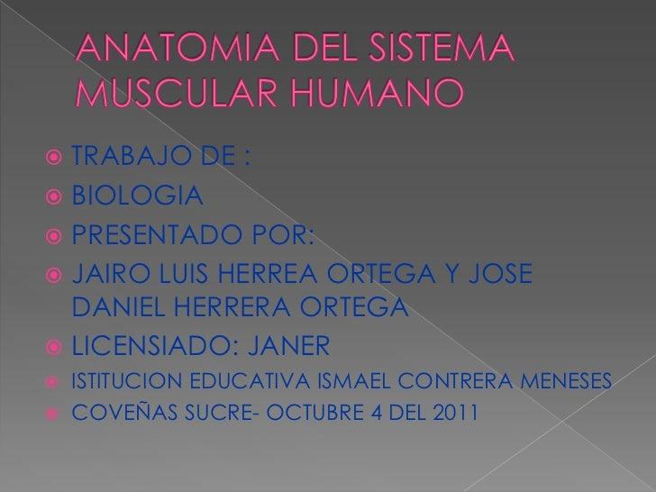 Anatomía del sistema muscular humano
