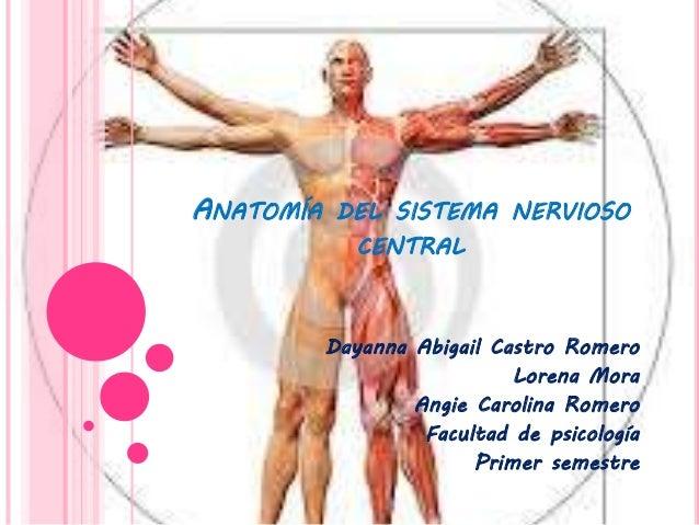 ANATOMÍA DEL SISTEMA NERVIOSO CENTRAL Dayanna Abigail Castro Romero Lorena Mora Angie Carolina Romero Facultad de psicolog...
