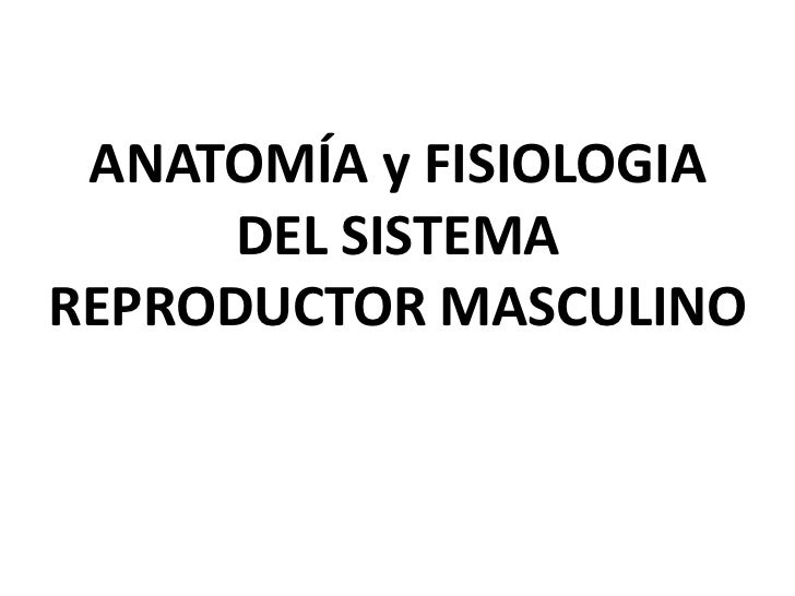 ANATOMÍA y FISIOLOGIA DEL SISTEMA REPRODUCTOR MASCULINO<br />