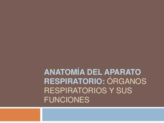 ANATOMÍA DEL APARATORESPIRATORIO: ÓRGANOSRESPIRATORIOS Y SUSFUNCIONES