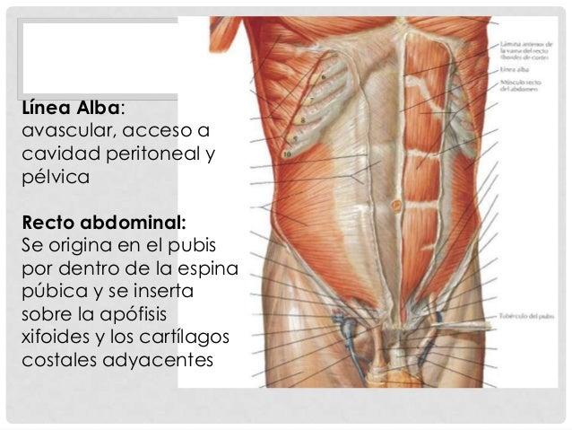 Anatomía del tracto urinario inferior y genitales masculinos