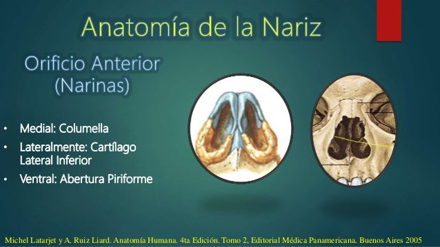 Anatomia de Nariz