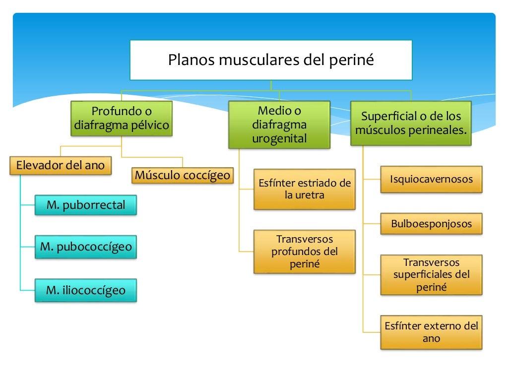 Anatomía de piso pélvico
