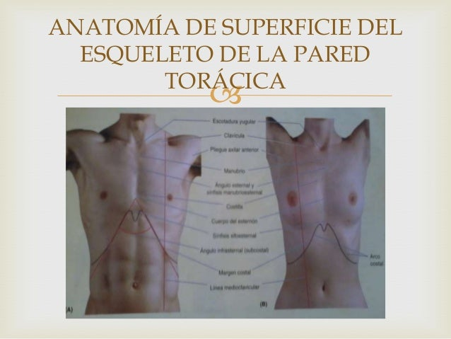 Anatomía de Superficie Tórax