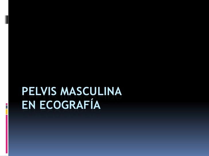 PELVIS MASCULINAEN ECOGRAFÍA