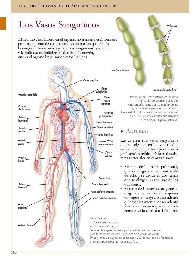 Anatomíaenciclopedia