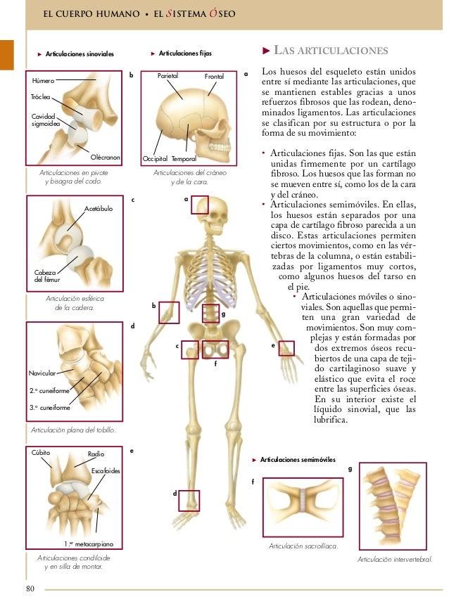 Encantador Imágenes De Articulaciones En El Cuerpo Humano ...