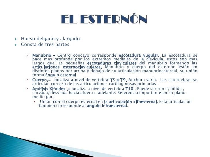Anatom A Esternon