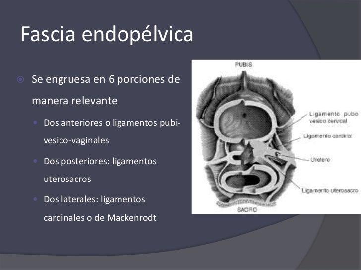 Anatomía, estática y dinámica de vísceras pelvianas