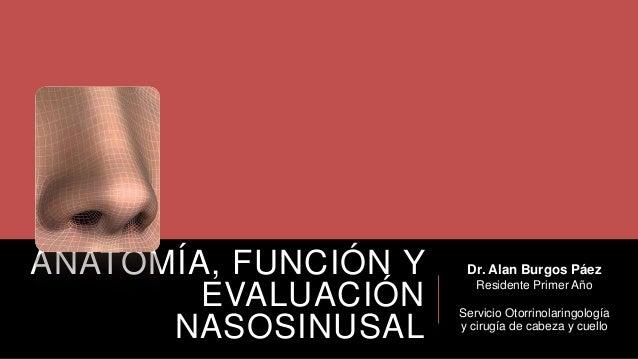 ANATOMÍA, FUNCIÓN Y EVALUACIÓN NASOSINUSAL  Dr. Alan Burgos Páez Residente Primer Año Servicio Otorrinolaringología y ciru...