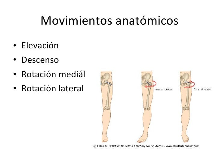 Excepcional Definición De Rotación En La Anatomía Ornamento ...