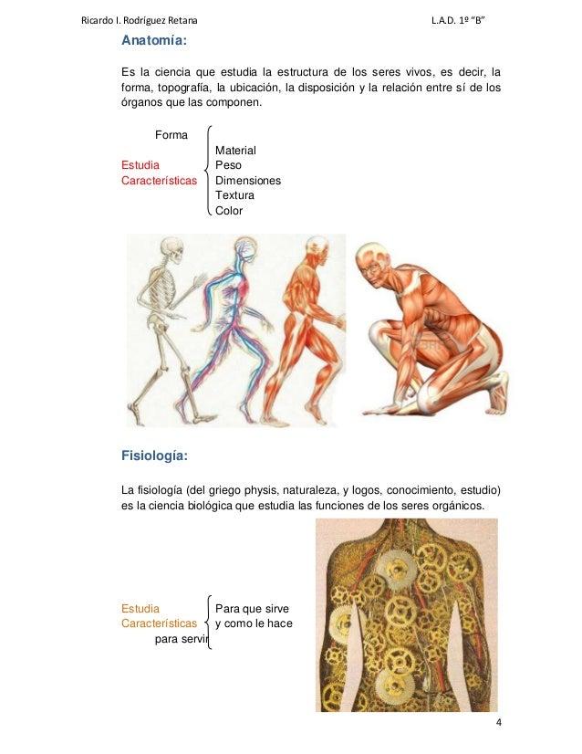 Excepcional ámbito De La Anatomía Y Fisiología Imagen - Imágenes de ...