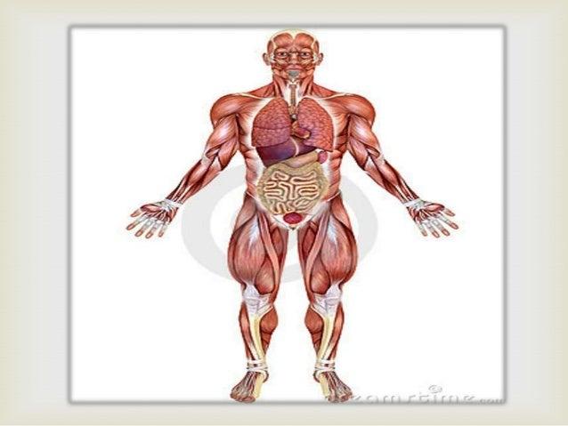Compendio Anatomía Humana.