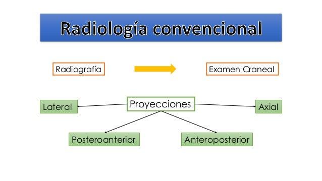 Anatomía (imagenes de la cabeza) diapositivas