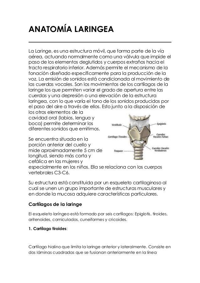 ANATOMÍA LARINGEALa Laringe, es una estructura móvil, que forma parte de la víaaérea, actuando normalmente como una válvul...