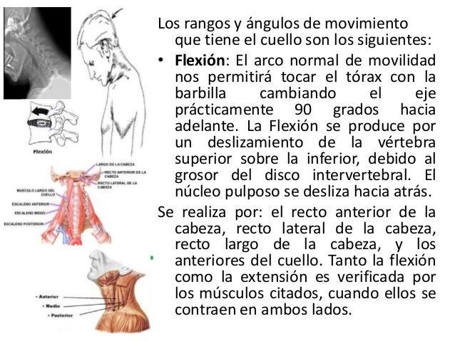 Movimientos del cuello