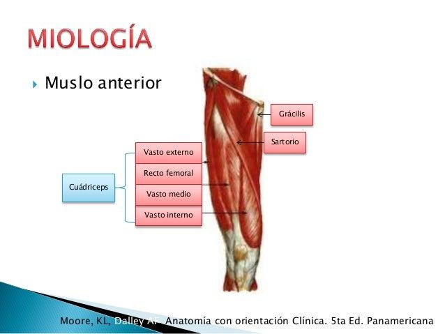 Anatomía mmii