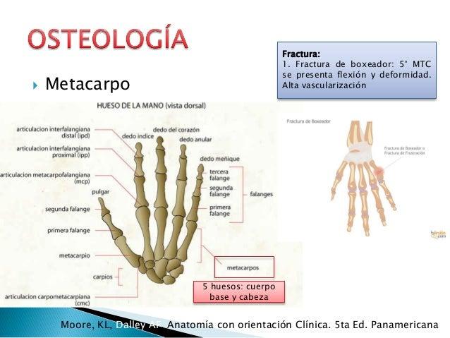 Anatomía mmss