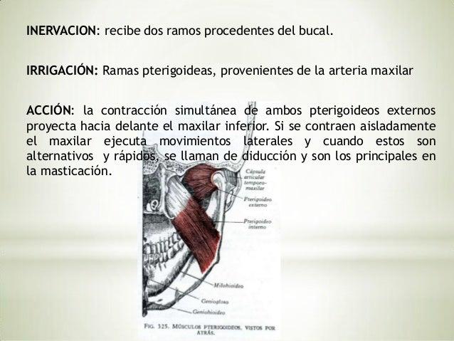 MUSCULOS DE LA MASTICACIÓN. Pág. 314-317,Anatomía     Humana,  Fernando     QuirozGutiérrez, Tomo I                      *