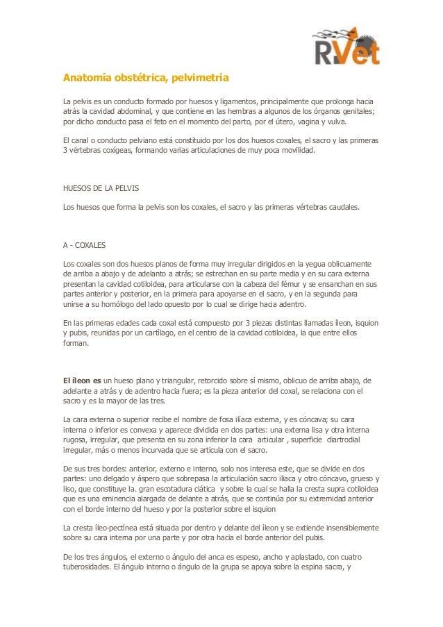 Anatomía obstétrica. documento descargable (1)