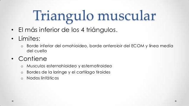 Anatom a palpatoria clase 1 cabeza y cuello for Esternohioideo y esternotiroideo