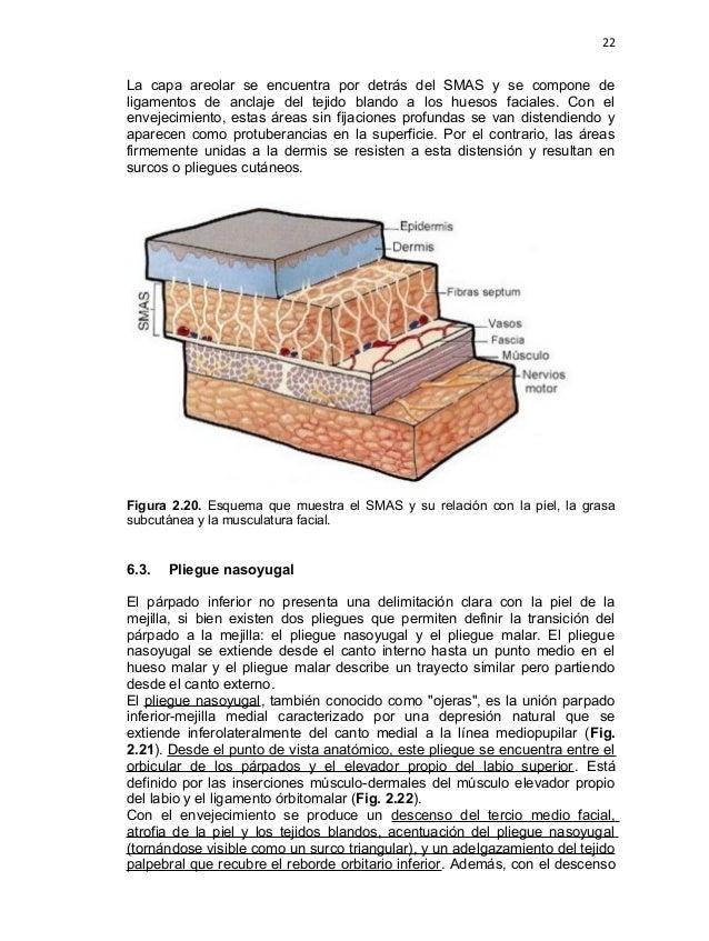 Famoso Anatomía De Las Capas De La Piel Friso - Anatomía de Las ...