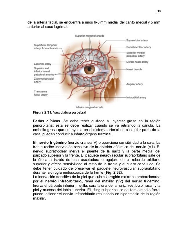 ANATOMIA QUIRURGICA DE LA FRENTE, PARPADOS Y TERCIO MEDIO FACIAL