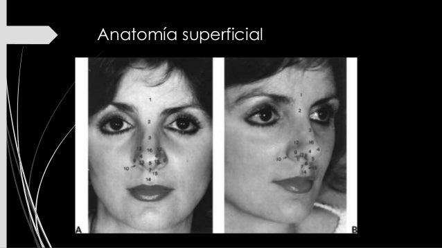 Anatomía quirúrgica de la nariz