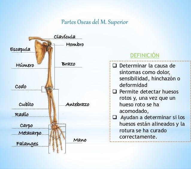 Anatomía radiológica de extremidad superior