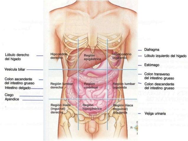 Anatomía radiológica del abdomen