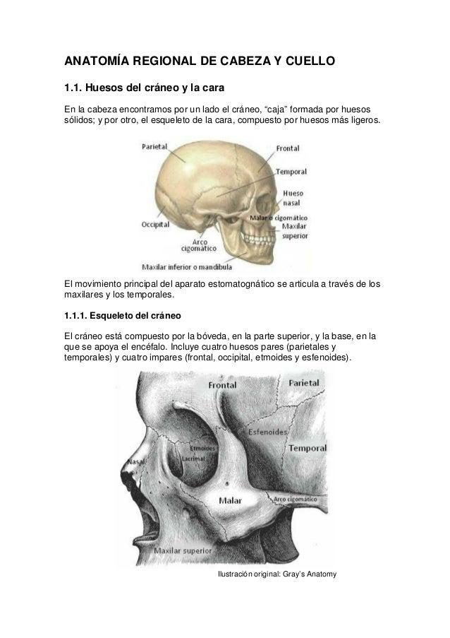 Anatomía regional de cabeza y cuello
