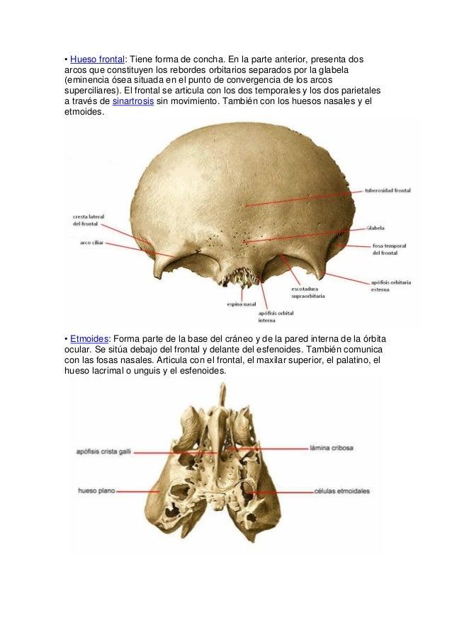 Excelente La Parte Superior De La Anatomía Cabeza Imágenes ...