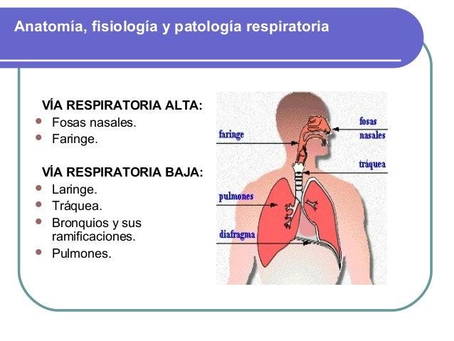 Anatomia respiratoria Dr. Diego Eduardo Góngora Navarrete
