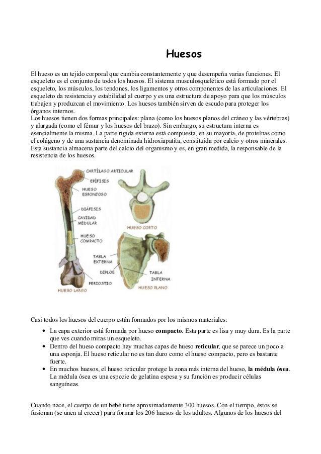 Anatomía ósea