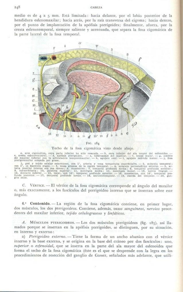 Anatomía topográfica   testut, jacob