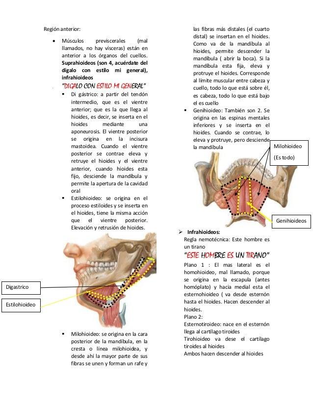 Excelente Región De La Anatomía Mentales Cresta - Imágenes de ...